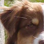 Profilbild von Webmaster